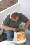 Vorsichtig die Pflanzen einsetzen
